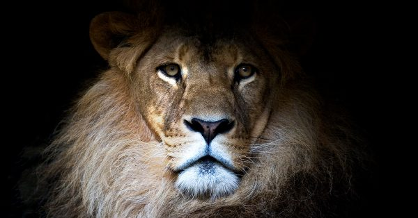 7 Fascinating Facts That Will Change How You Read the Book of Daniel